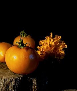 seminte rosii -portocalii