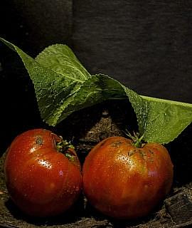 seminte rosii mari