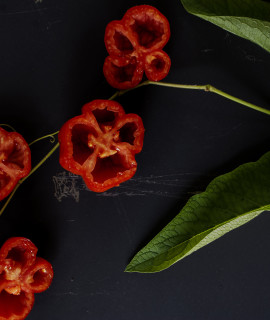 rosii gogosar2