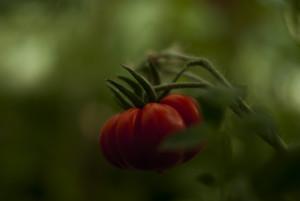 rosie rosie 1