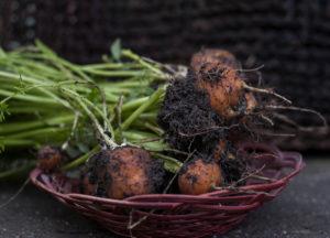 ce legume se planteaza in Martie