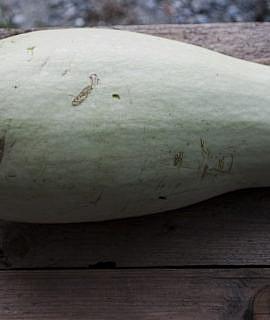 seminte-de-dovlecel-alb