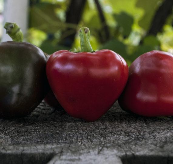 seminte-ardei-gras-rosu