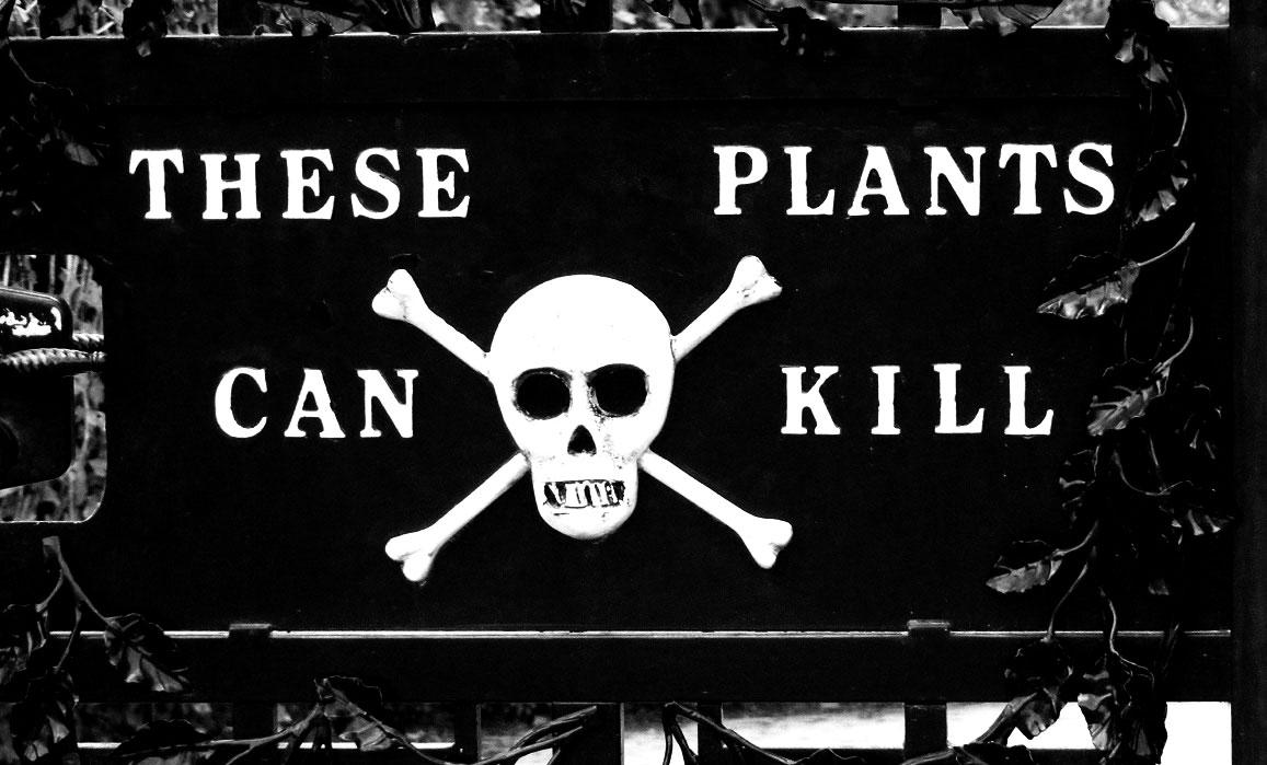 plante-otravitoare