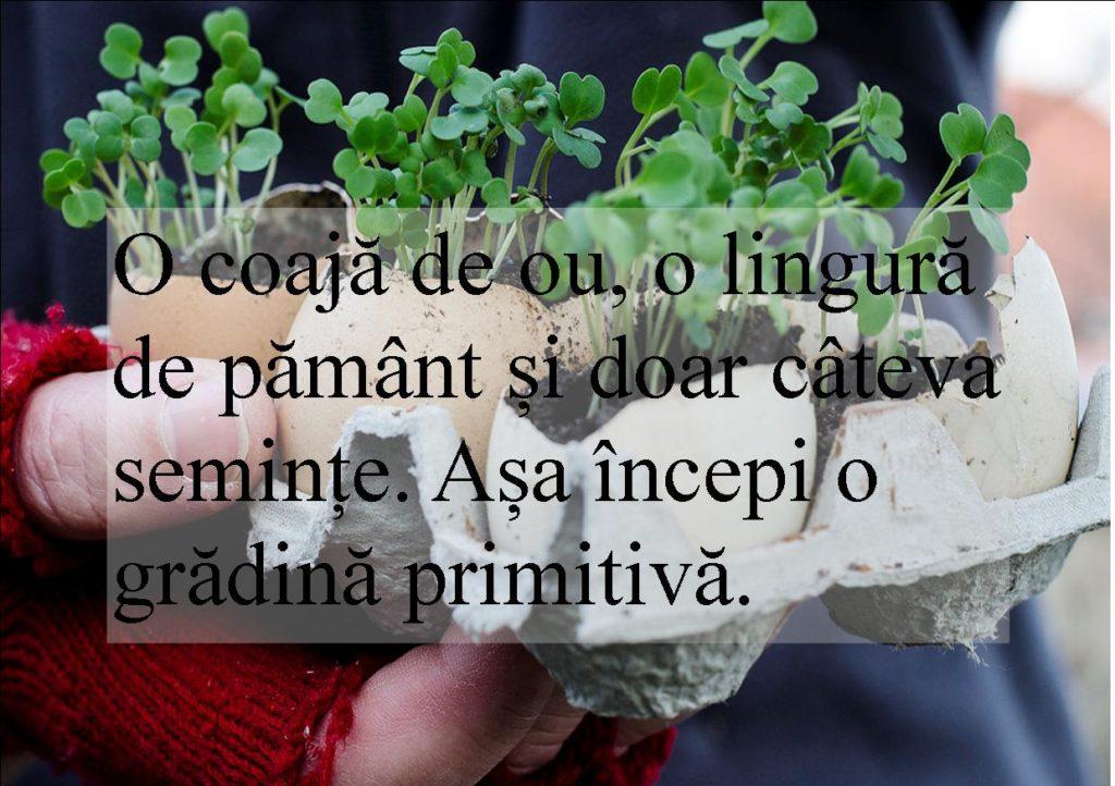 grădină